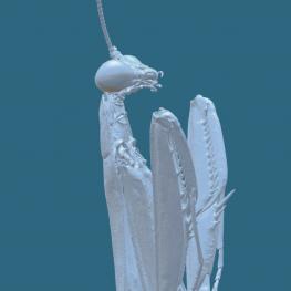 Skenovali jsme největšího vodního brouka světa