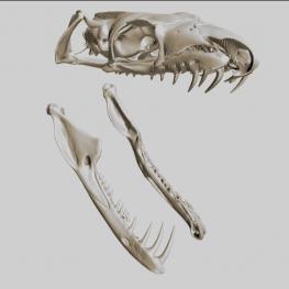CT skenování lebky anakondy